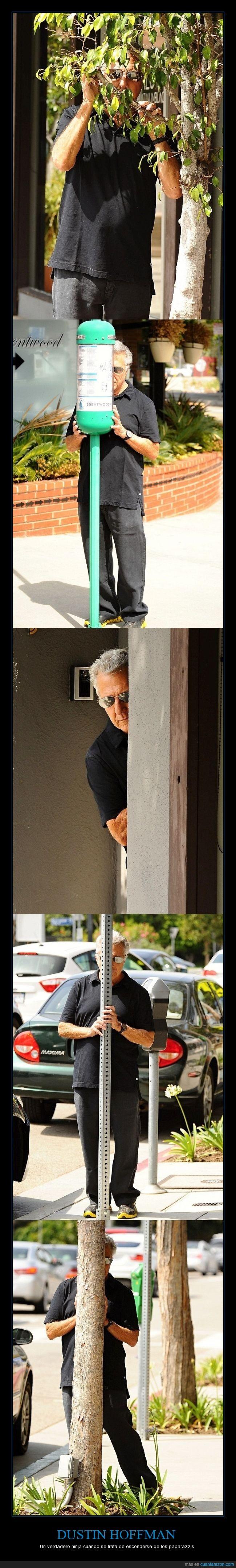 actor,arbol,campeón mundial de escondite,detras,Dustin Hoffman,esconder,farola,hojas,mal,ninja