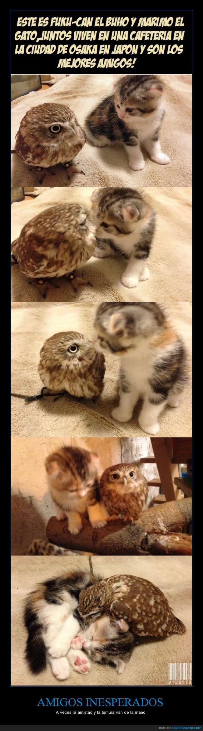 amistad,animales,buho,fuku-can,gato,marimo