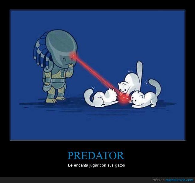 cabeza,gatos,jugar,laser,predator