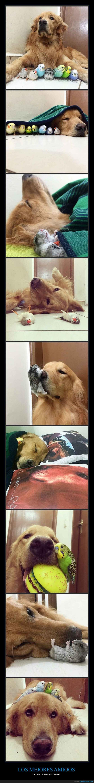 amistad,can,Canarios aves,hámster perro,labrador
