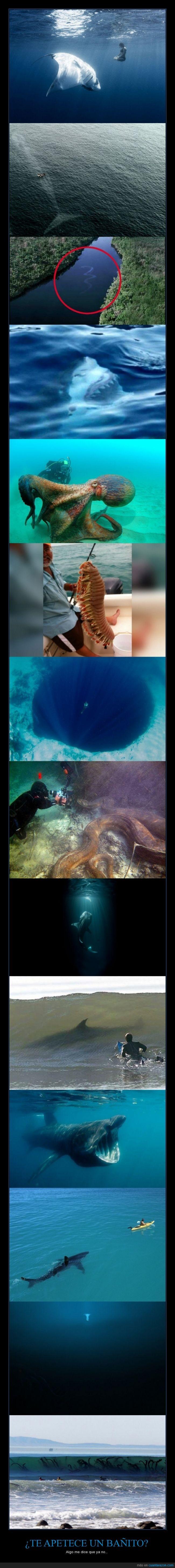 agua,alga,mar,nadar,oceano,pulpo,serpiente,surf,tiburon