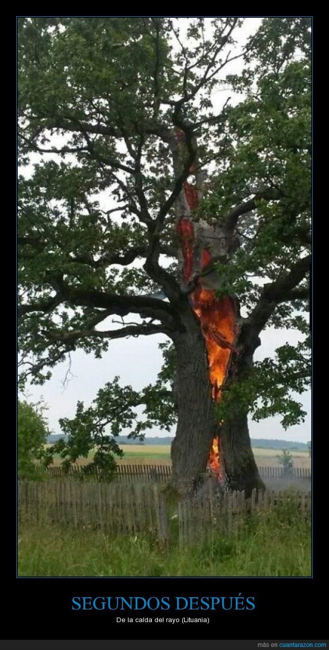Árbol,dentro,descarga,Fuego,impacto,Lituania,rayo,tronco