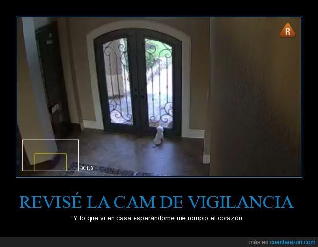 amo,camara,comprobar,dueño,esperar,mirada,mirar,perro,puerta,seguridad,sistema,vigilancia,volver