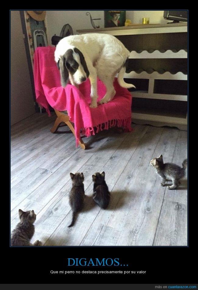 ailurofobia,cachorro,cria,gatito,gato,gatofobia,grande,pequeño,perro