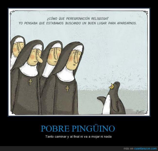 apareamiento,comic,hábito,humor,monjas,Pingüino,reacción,religiosa,ropa