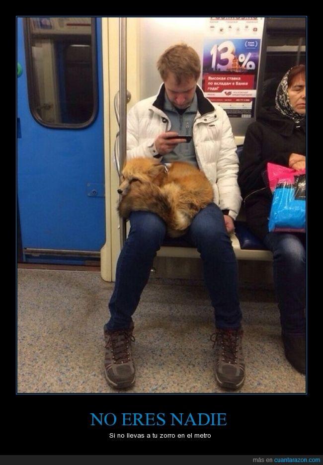 mascota,metro,seguro que es ruso,típico,zorro