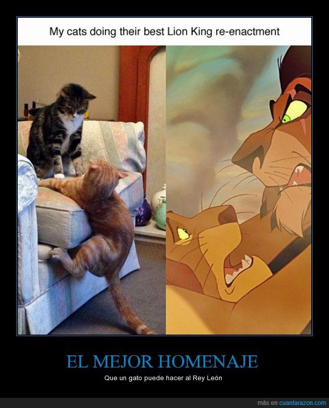 actuación,escena,Gato,larga vida al rey,parodia,rey león
