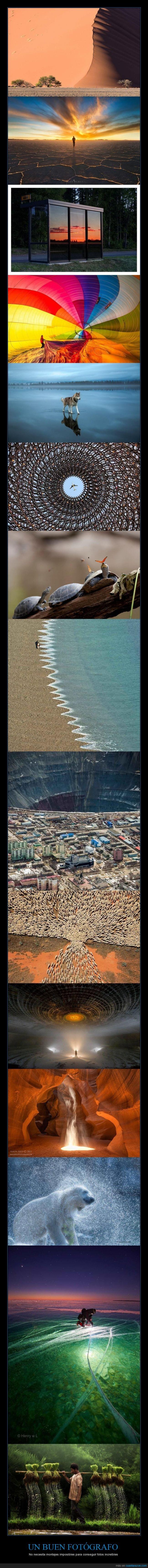 agua,arte,desierto,duna,fotografia,fotografo,hielo,mar,ola,oso polar,photop