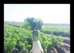 Enlace a Frutas y verduras