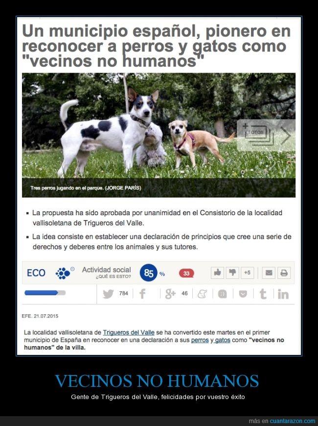 animal,compañía,gato,humano,mascota,no,perro,tutor,vecino