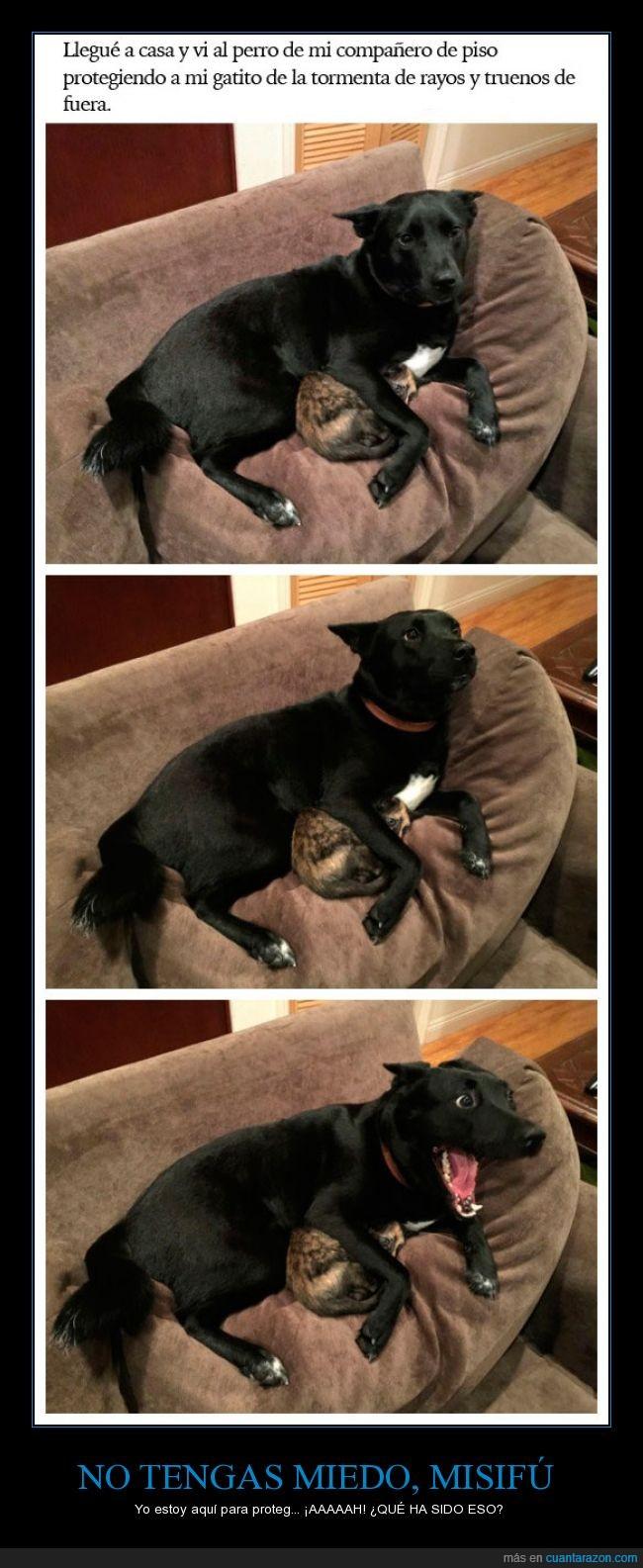 compañero,gatito,gato,negro,perro,piso,proteger,rayos,salvar,truenos