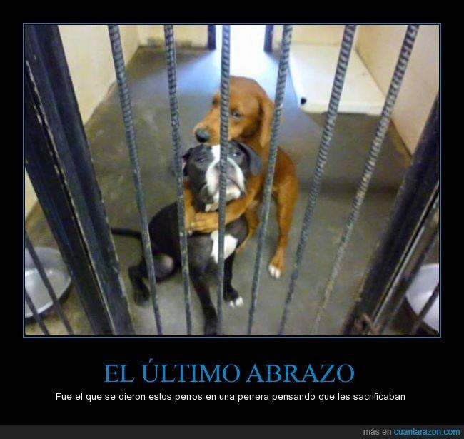 abrazo,amor,angel,animal,perrera,perro,rescatar,rescate,salvar