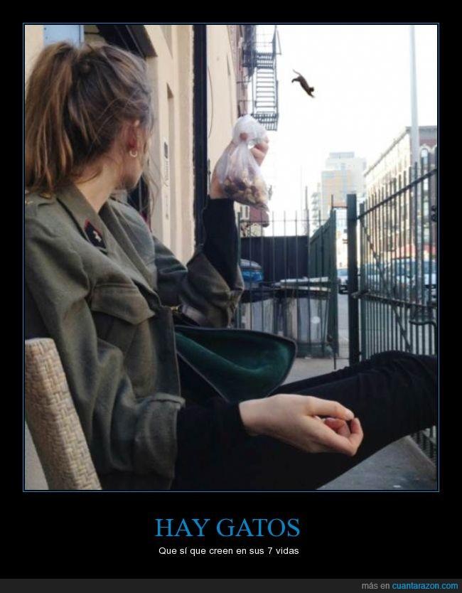 adiós,balcón,brinco,calle,Gato,peligro,saltar,salto,suicidio,tirar,verja