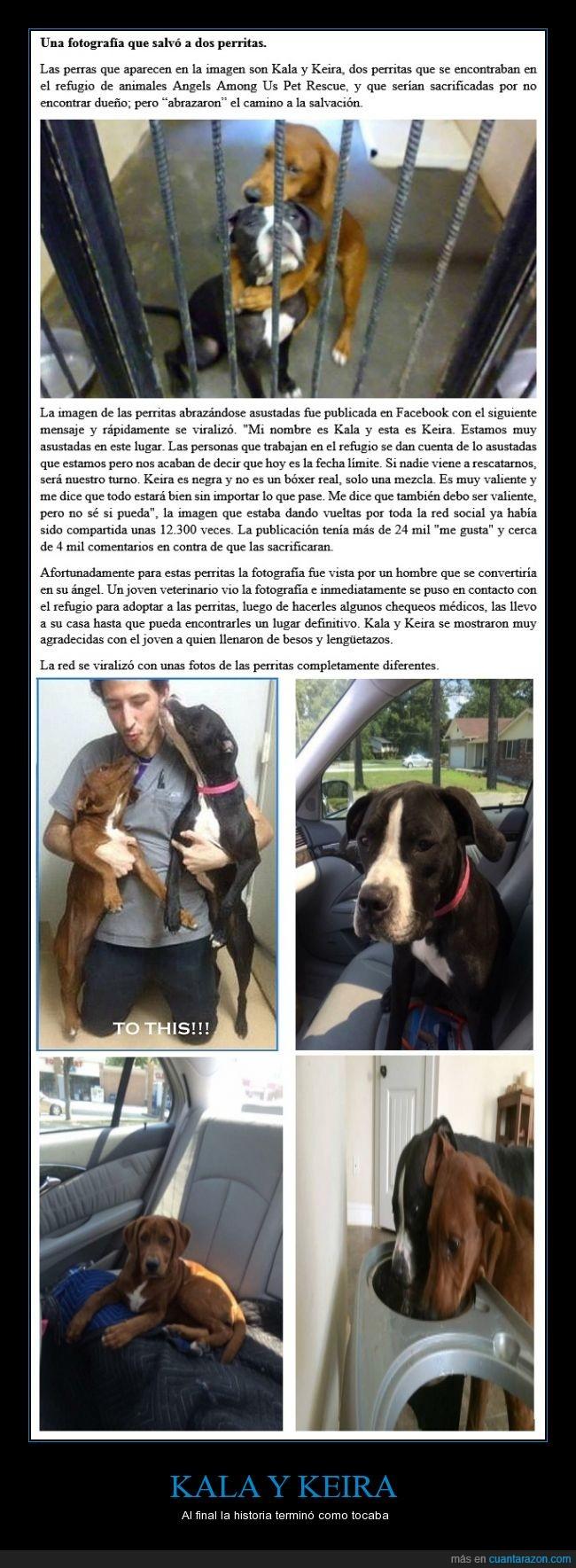 Adopción,ayuda,Perritas,Refugio,Salvación,salvar,veterinario