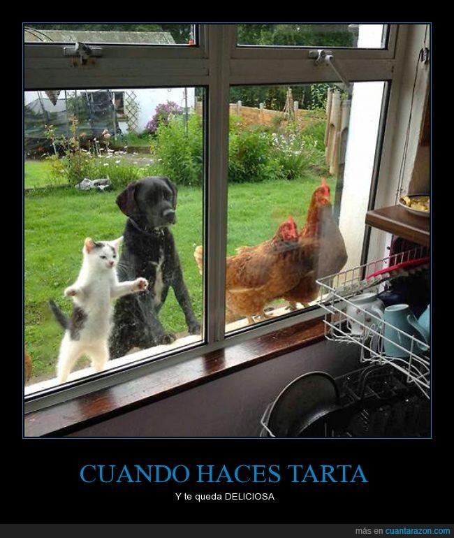 animal,curiosidad,deliciosa,Gallinas,gato,mirar,Perro,tarta,ventana