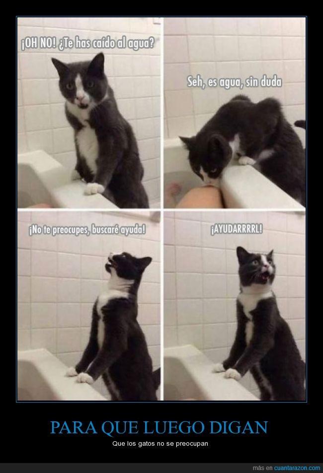 agua,ayudar,bañera,baño,buscar,gato,humano,pedir,rescate,salvar