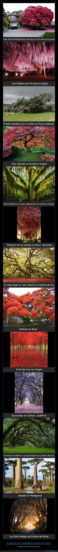 Alemania,Ángel,Árbol Rhododendron,Baobab,Bonn,Canadá,cerezos,Haya antártica,impresionantes,increíbles,Irlanda,Japón,John Island,majestuosos,Nueva Zelanda,robles,viento,Wisteria