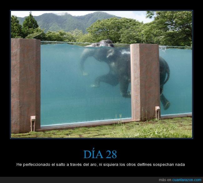 delfín,elefante,piscina,zoo