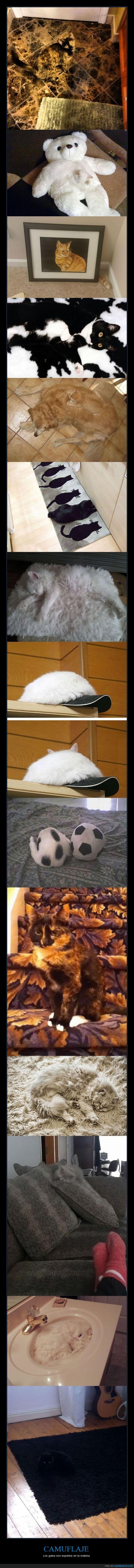 bonitos,camuflaje,color,gatos,mascotas