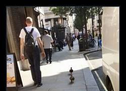 Enlace a Patos, cada día más integrados en nuestra sociedad
