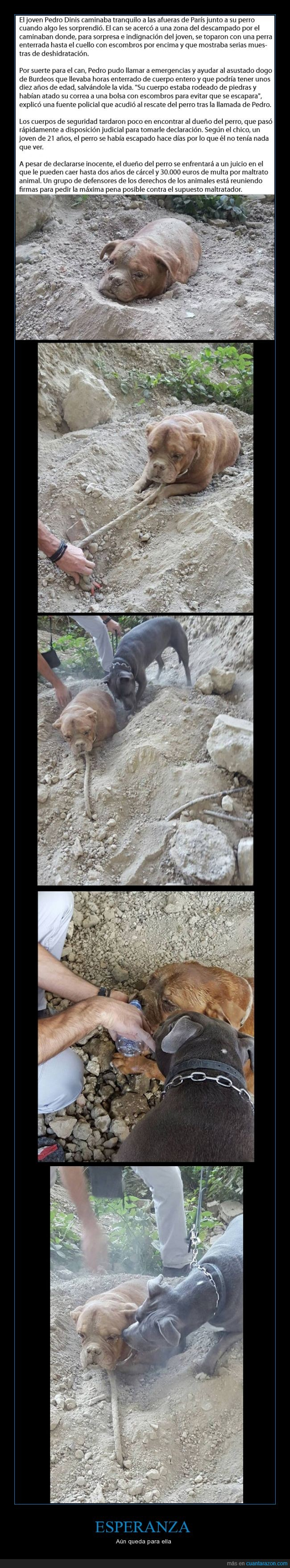 enterrada,espero que ahora encuentre un mejor hogar,Paris,Pedro,perra