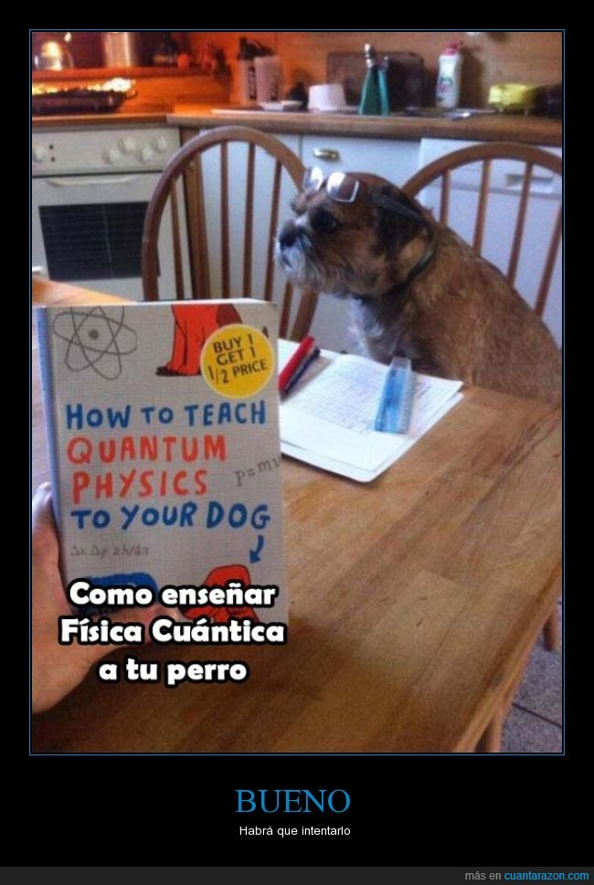 enseñar,física cuántica,perro