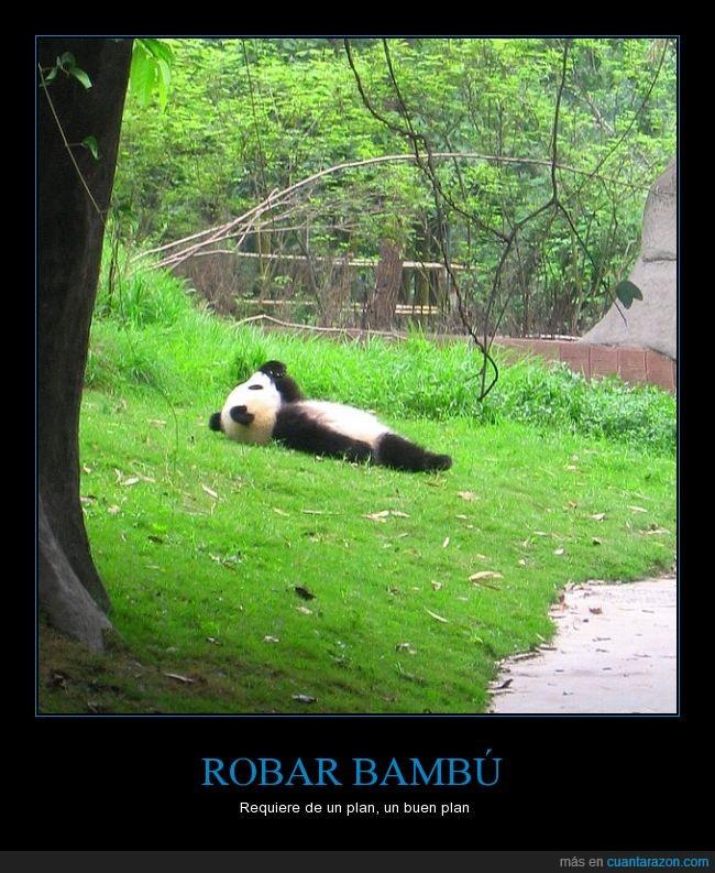 bambú corporation bank,dormir,monada,osito,oso,Panda,pensar