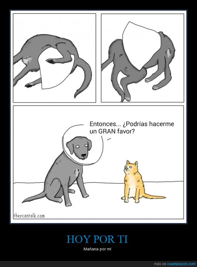 cono,favor,Gato,lamer,perro