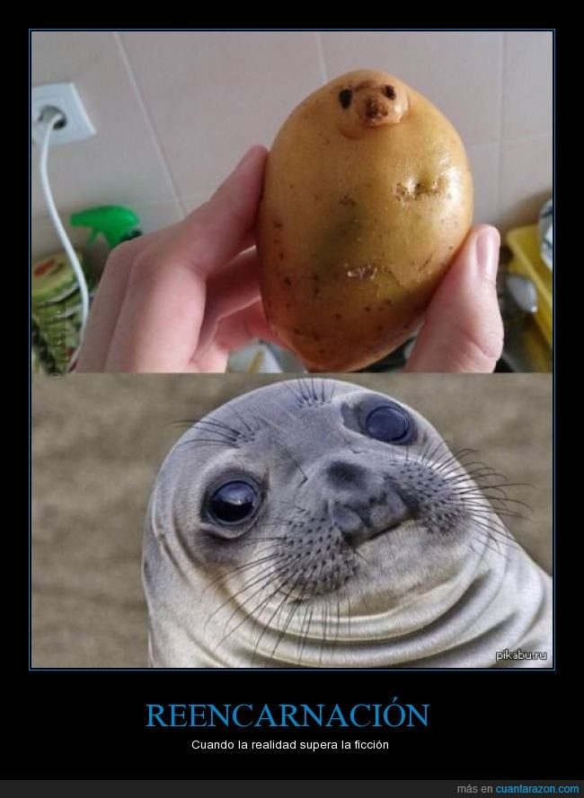 foca,meme,parecido razonable,patata,seal