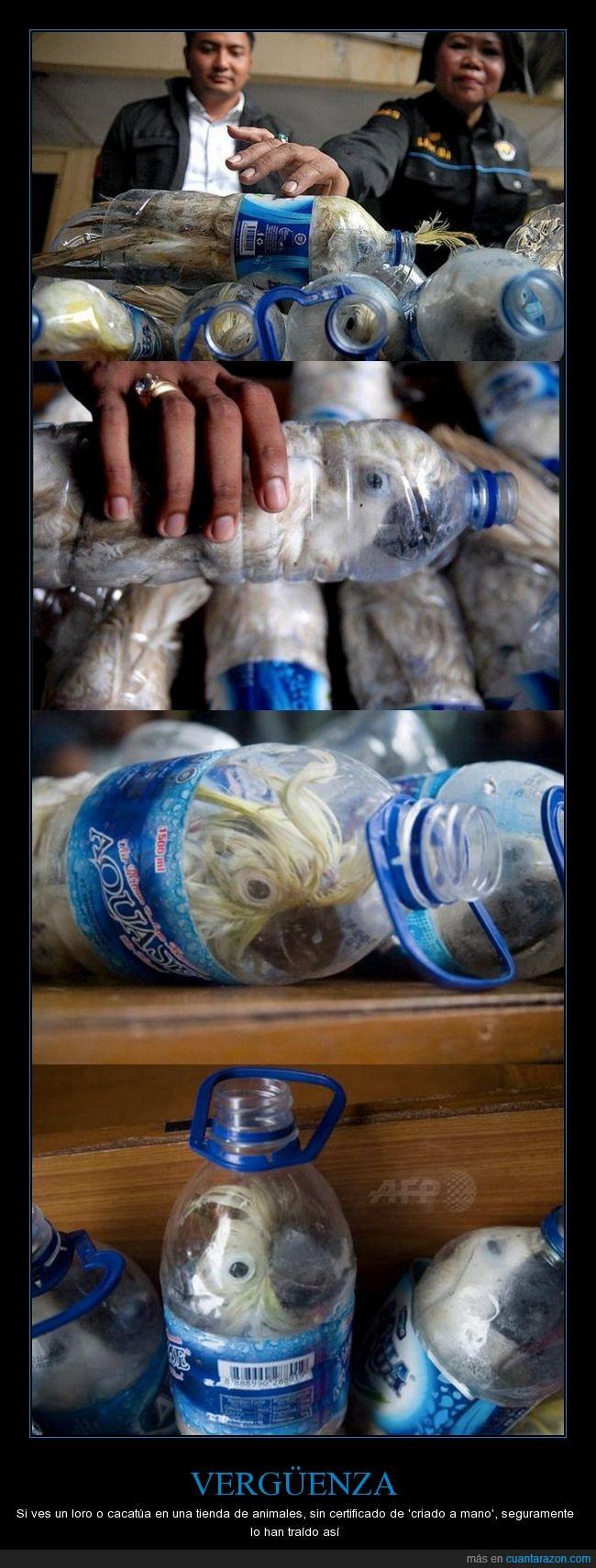botella,cacatúa,loro,stop,vergüenza
