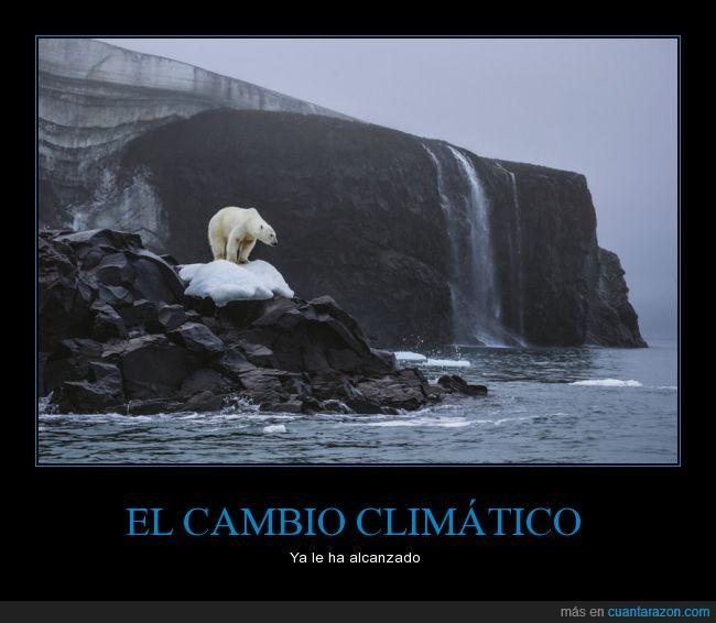 calentamiento global,cambio climático,derretidos,deshielo,océanos,Oso polar,polos