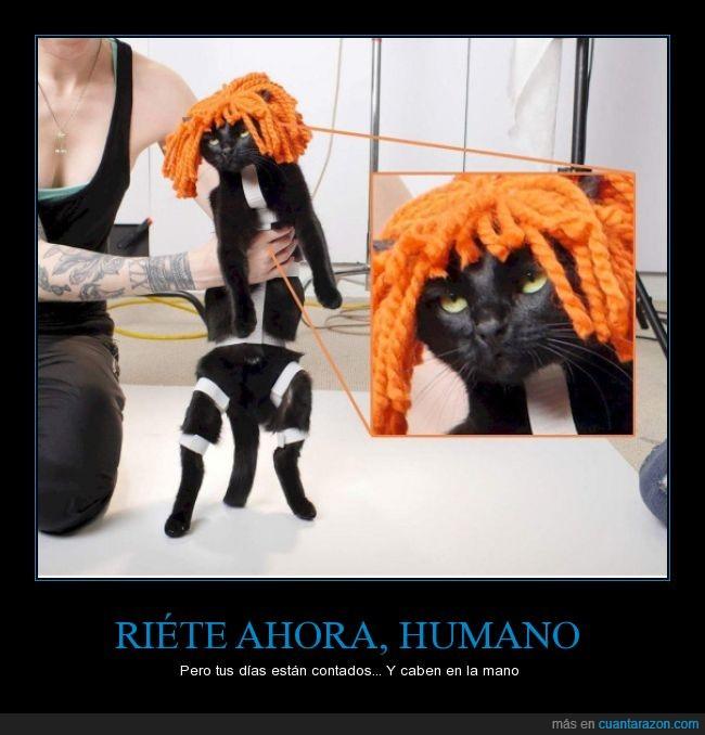 cosplay,disfraz,El quinto elemento,felino,Gato,maltrato