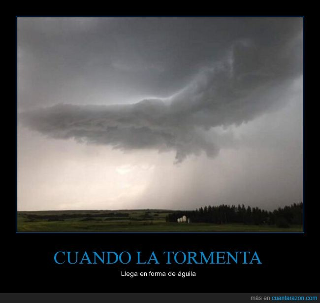 afe,águila,buho,cielo,forma,lluvia,Nube,tormenta
