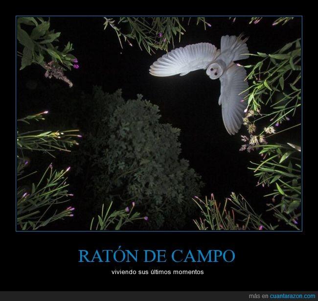 ataque,ave,estrigiformes,Lechuza,noche,nocturna,rapaz,vuelo