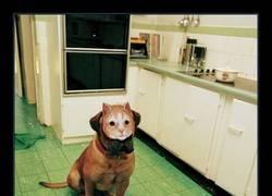 Enlace a Aunque no lo creas, es un perro