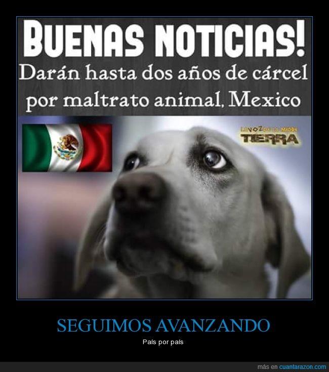 animal,ley cárcel,Maltrato,México,perro