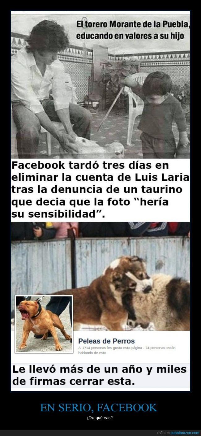 animal,facebook,hipocresia,niño,no le veo el sentido,peleas de perros,polemica,respeto,sensibilidad,torero,violencia
