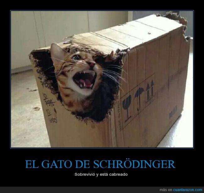 cabreado,caja,experimento,gato,Schrödinger