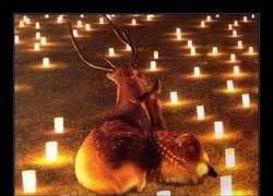 Enlace a Bambi ha encontrado el amor