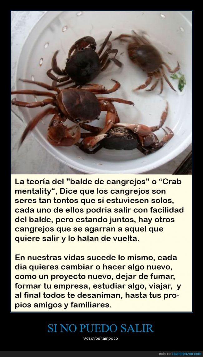 cangrejos,competencia,Crab mentality,crabs in the bucket,envidia,Individual,metáfora,teoría