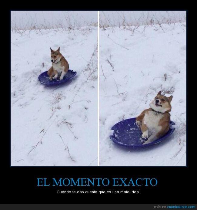 bajar,cara,corgi,expresión,miedo,nieve,perro,susto,trineo