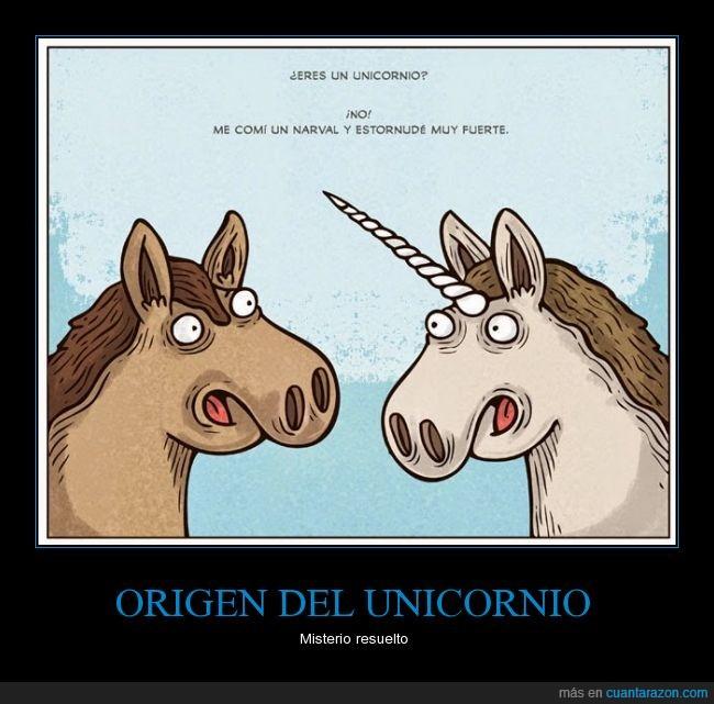 caballo,comer,cuerno,estornudar,fuerte,narval,origen,unicornio
