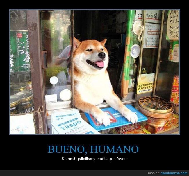 akita,doge,galletitas perrunas,humano,inu,japon,japones,perro,precio,shiba,tienda