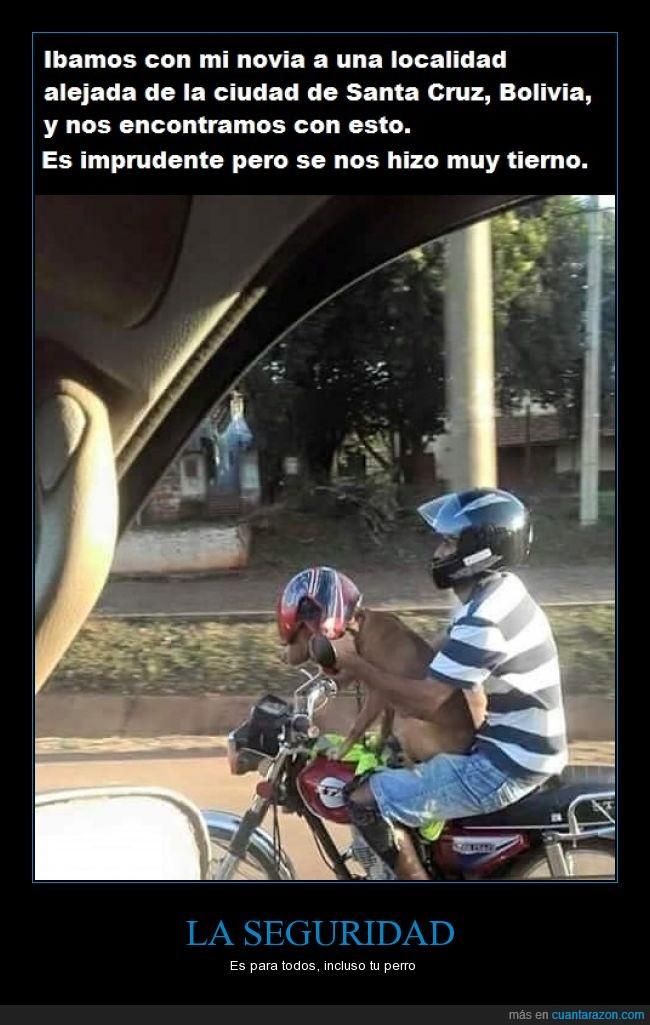 casco,es imprudente llevar a un perro así,moto,perro,seguridad