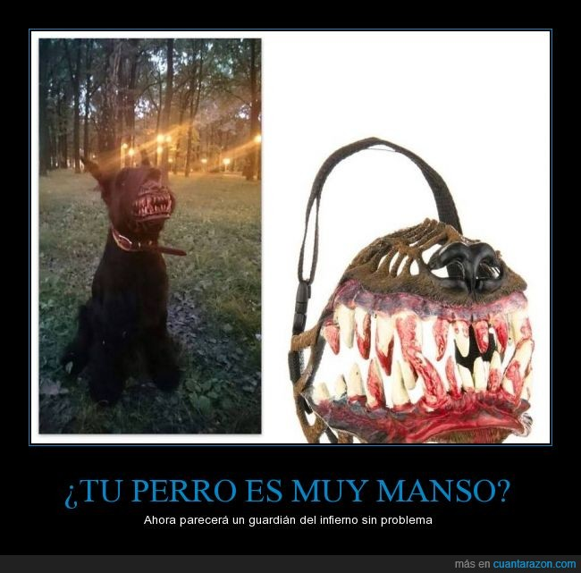 bosque,Bozal,can,colmillo,dentadura,dientes,fiero,hell hound,perro,sagre