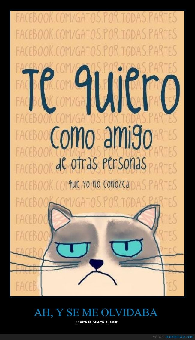 amigos,amistad,gatos,grumpy cat,odiar,odio,simpatía,te quiero