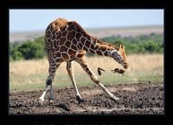 Enlace a Seguro que no habías visto a una jirafa estornudar antes