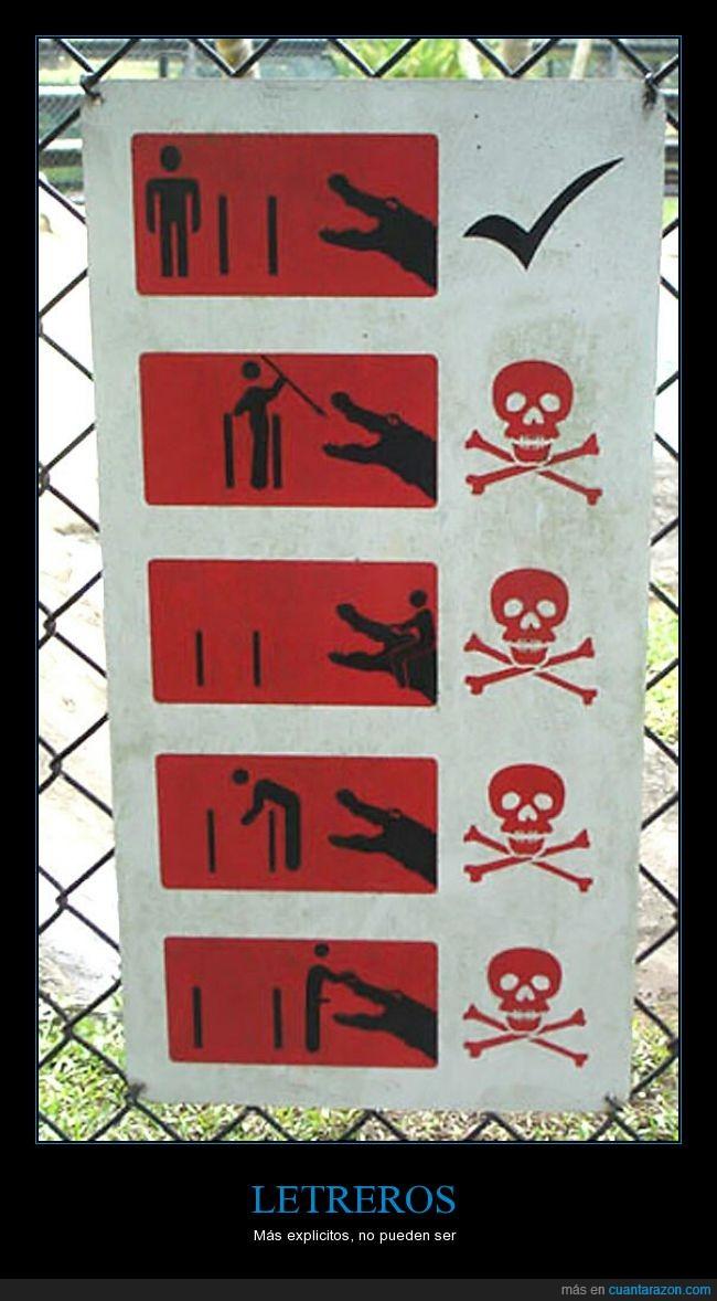 ataque,Caimán,cocodrilo,comer,muerte,no acercarse,Peligro,precaución