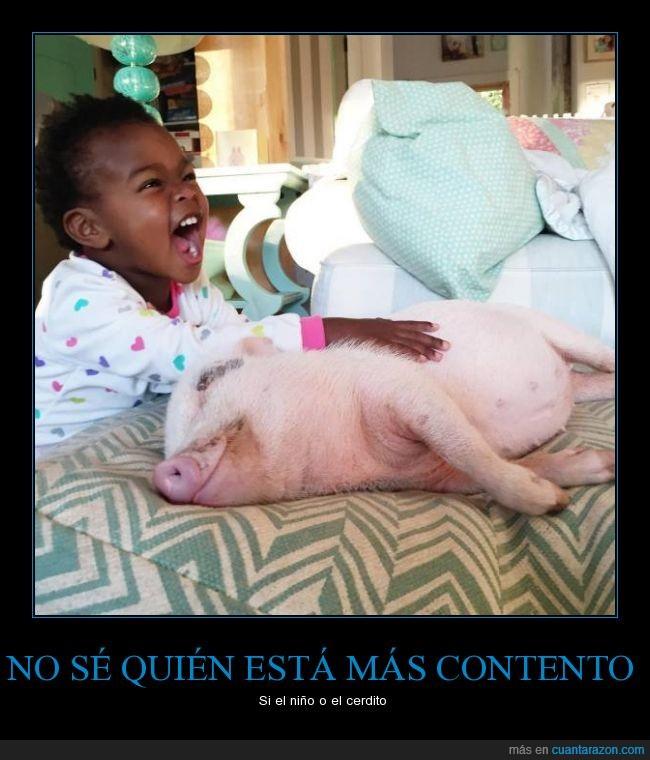 agusto,cerdito,cerdo,comodo,contento,feliz,niño,tocar