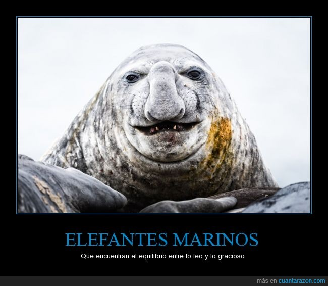 abuelo,elefante,feo,gracioso,marino,polar,sonriendo